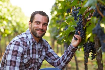 Фамилия Виноградов – результат искусственного образования. Почему эту фамилию принимали люди, никогда не видевшие растение виноград?